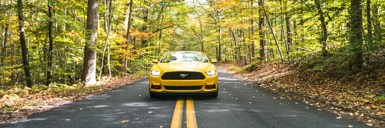 mustang on the road