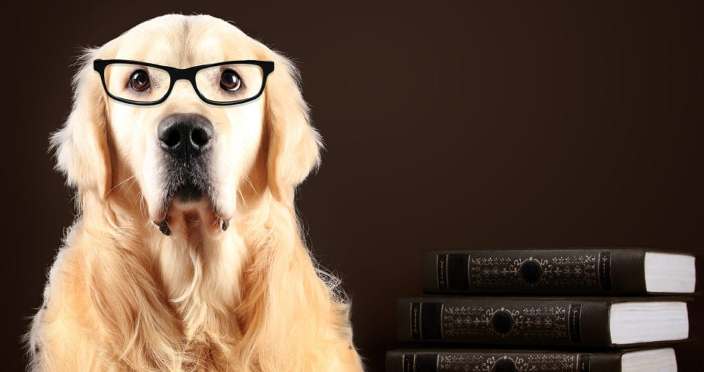 Golden Retriever dog in glasses sitting on black background with books .
