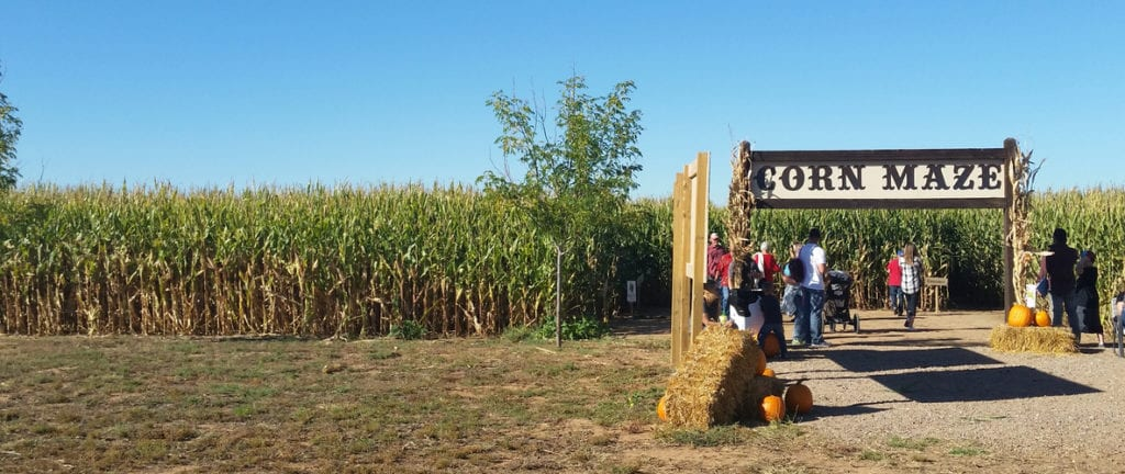 Moriarty, New Mexico, United States - October 10, 2015: Families Gathered at Corn Maze Entrance at McCall's Pumpkin Patch.